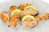 Mussels on ice close-up — Stock Photo