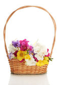 Beautiful bouquet of freesias in basket, isolated on white — Stock Photo