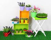 Hermosos coloridos estantes y mesa con elementos decorativos pisando la hierba — Foto de Stock