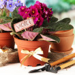 Bright saintpaulias and garden tools on natural background - Foto de Stock