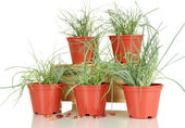 Pots with seedling isolated on white — Stock Photo