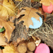 Easter eggs hidden in leaves — Foto de Stock