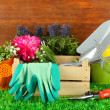Garden tools on grass in yard — Stock Photo #23002140