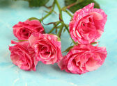 Beautiful pink roses close-up, on color background — Stock Photo