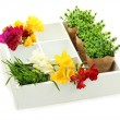 Beautiful flowers arranged in wooden box isolated on white - Stock Photo