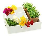Beautiful flowers arranged in wooden box isolated on white — Stock Photo