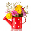 Red watering cwith white polka-dot with flowers isolated on white — Stock Photo #23109704