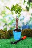 небольшое дерево в ведро на траве на естественный фон — Стоковое фото