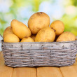 Ripe potatoes on basket on wooden table on natural background — Stock Photo #23187464