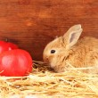 Fluffy foxy rabbit in a haystack with apples on wooden background - Stock Photo
