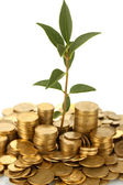 Plant growing out of gold coins on white background close-up — Stock Photo