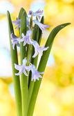 Beautiful hyacinth, on bright background — Stock Photo