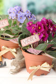 Bright saintpaulias and garden tools on natural background — Stock Photo