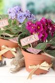 Jasne saintpaulias i narzędzia ogrodowe na naturalne tło — Zdjęcie stockowe