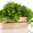 Wooden box with parsley and dill isolated on white — Stock Photo #23190914
