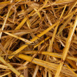 Golden hay close-up — Stock Photo