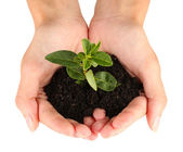 Woman's hands holding a plant growing out of the ground, on white background close-up — Stock Photo