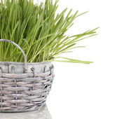 Green grass in basket isolated on white — Stock Photo