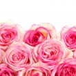 Beautiful bouquet of pink roses isolated on white — Stok fotoğraf