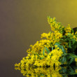 Sprigs of mimosa on bright background - Foto de Stock