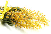 Twigs of mimosa flowers, isolated on white — Stockfoto