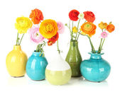 Ranunculus (persian buttercups) in vases, isolated on white — Stock Photo