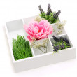 Beautiful flowers arranged in wooden box isolated on white — Foto Stock