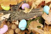 Easter eggs hidden in leaves — Stock Photo