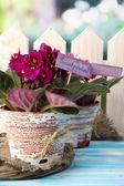 Bright saintpaulias on natural background — Stock Photo