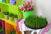 Colorful shelves and table with decorative elements and flowers — Stock Photo
