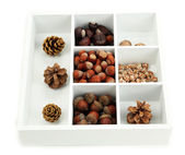 Assortment of nuts,chestnut, pinecone and acorn in white wooden box isolated on white — Stock Photo