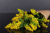 Sprigs of mimosa on dark background — Stock Photo