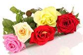 Hermosas rosas coloridas aisladas en blanco — Foto de Stock