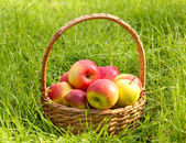 Basket of fresh ripe apples in garden on green grass — Stok fotoğraf