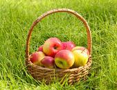 Panier de pommes mûres fraîches dans le jardin sur l'herbe verte — Photo
