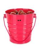 Bucket with hazelnuts isolated on white — Stockfoto