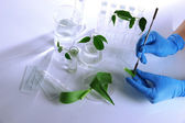 Test tubes with plant on light background — Stock Photo