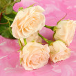 Royalty-Free Stock Photo: Beautiful creamy roses close-up, on color background