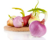 Sprouting onions on board close-up — Stock Photo