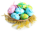Easter eggs in basket and mimosa flowers, isolated on white — 图库照片