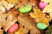 葉に隠されたイースターエッグ — ストック写真
