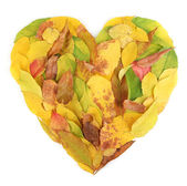 Mensonge de feuilles de l'automne lumineux en forme de cœur isolé sur blanc — Photo