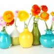 Ranunculus (persian buttercups) in vases, isolated on white — Stock Photo #23940307