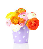Ranunculus (persian buttercups) in pail, isolated on white — Stockfoto