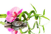 Still life with green bamboo plant, orchid and stones, on white background — Stock Photo