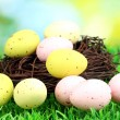 Stock Photo: Colorful easter eggs on grass