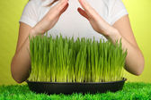 Hands protects growing grass on green background — Stock Photo