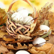Easter eggs in wicker basket hidden in leaves — Stock Photo