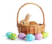 Fofo foxy coelho na cesta com ovos de páscoa, isolado no branco — Foto Stock