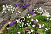 Flowers, tree bark and moss in forest close up — Stock Photo
